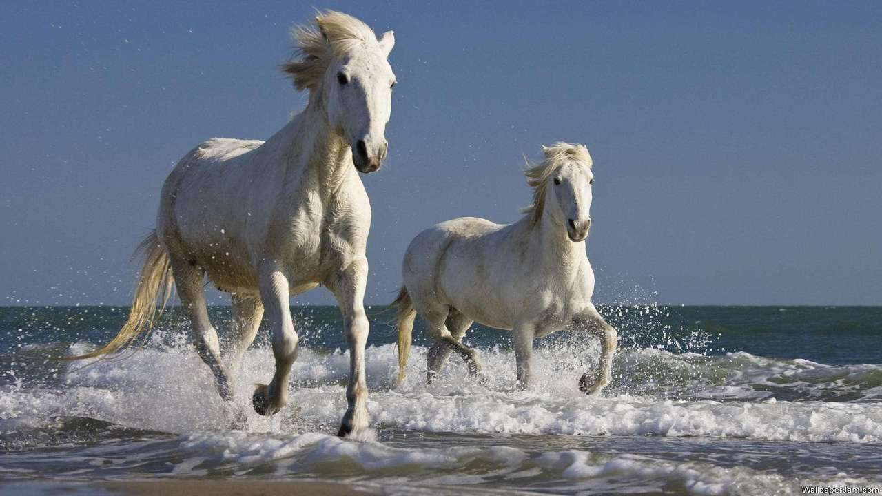 Adorable Horses HD Screensaver Featured Image