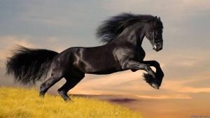 Очаровательные Лошади HD Заставка - Изображение 1