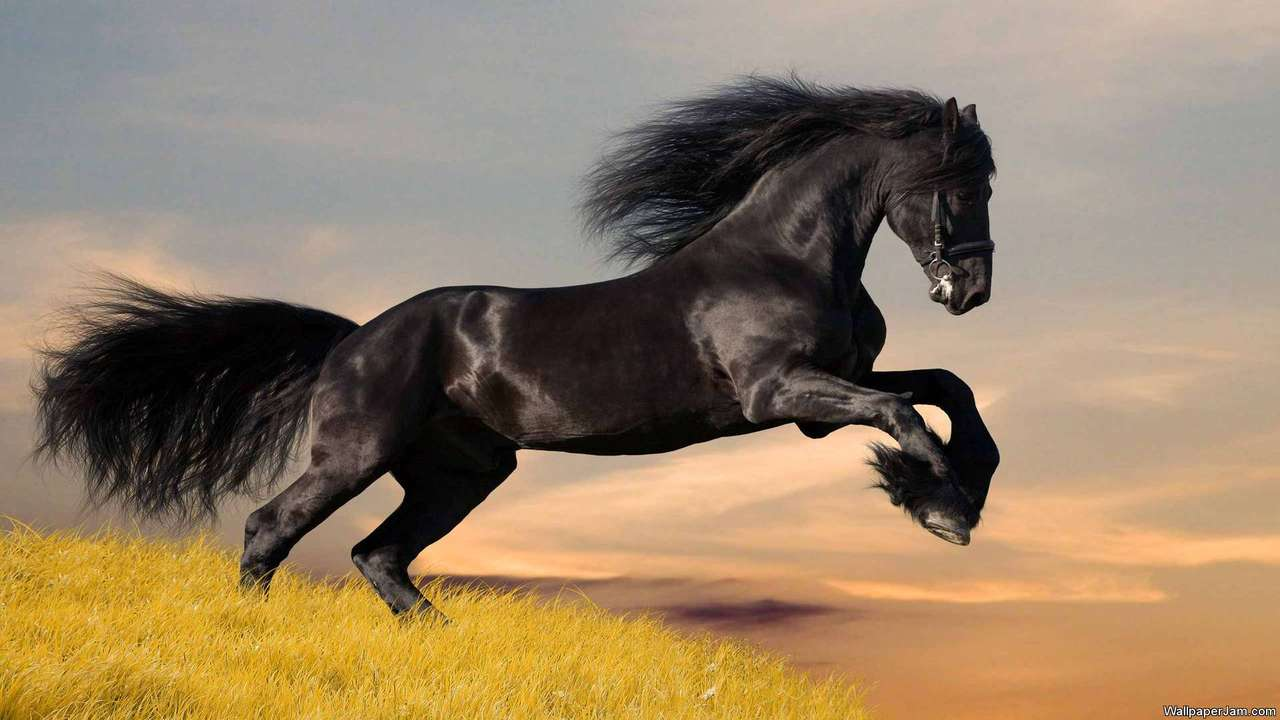 Adorable Horses HD Screensaver Image 1