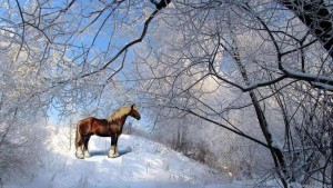 Adorable Horses HD Screensaver Image 3
