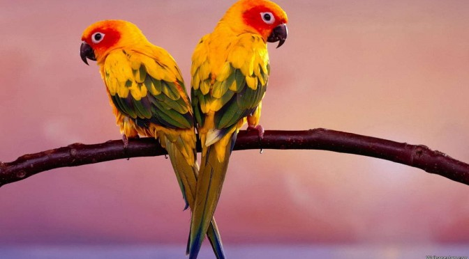 African Parrots HD Screensaver Featured Image