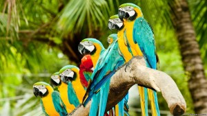 African Parrots HD Screensaver Image 3