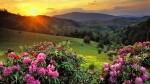 Красивая Природа HD Заставка - Заглавная Картинка