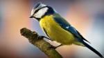 Яркие Птицы HD Заставка - Титульная Картинка