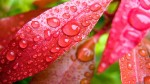 Water Drops HD Screensaver Featured Image